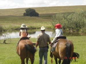 Mooikrans Equus, a horse farm worth visiting